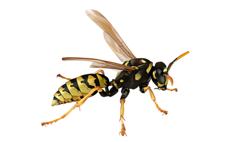 Wasp, Bees & Hornet Removal